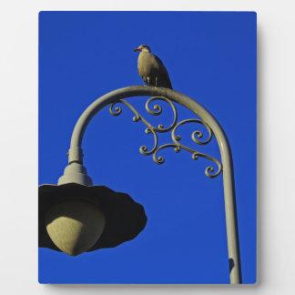 A San Francisco Seagull Photo Plaques