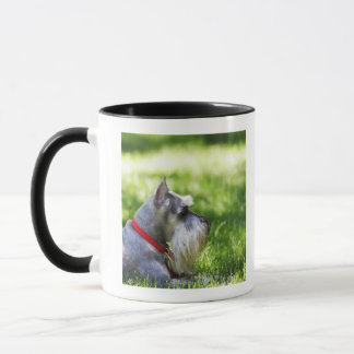 A Schnauzer laying in the grass Mug