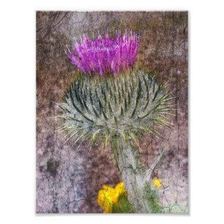 A Scottish Thistle Photo Print