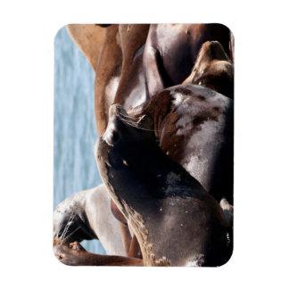 A Sea Lions Bellows Rectangular Photo Magnet