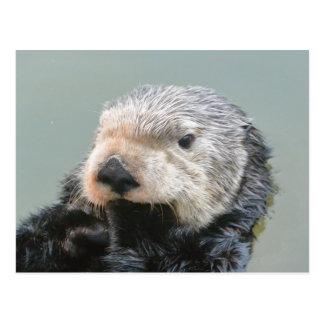 A sea otter philosopher postcard