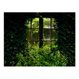 A secret garden window with climbing plants postcard