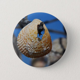 A Shell at the Shore 6 Cm Round Badge