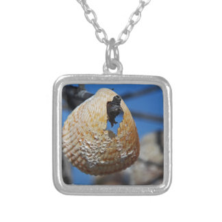 A Shell at the Shore Silver Plated Necklace