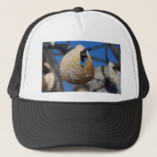 A Shell at the Shore Trucker Hat
