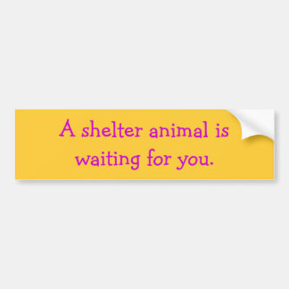 A shelter animal iswaiting for you. bumper sticker