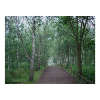 A Sherwood Forest Path Poster
