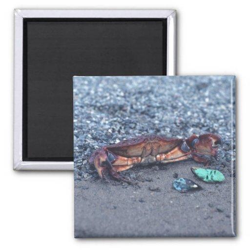 A Shore Crab Magnets