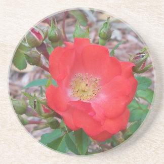 A simple salmon colored open rose coaster
