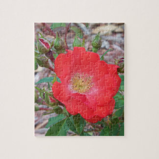 A simple salmon colored open rose jigsaw puzzle