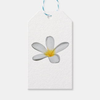 A Single Plumeria Flower Isolated Gift Tags