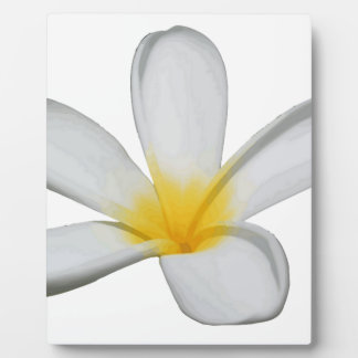 A Single Plumeria Flower Isolated Plaque