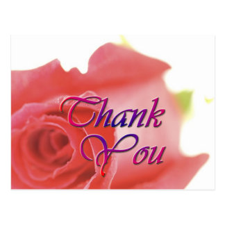 A Single Rose (1A) Thank You Card Postcard