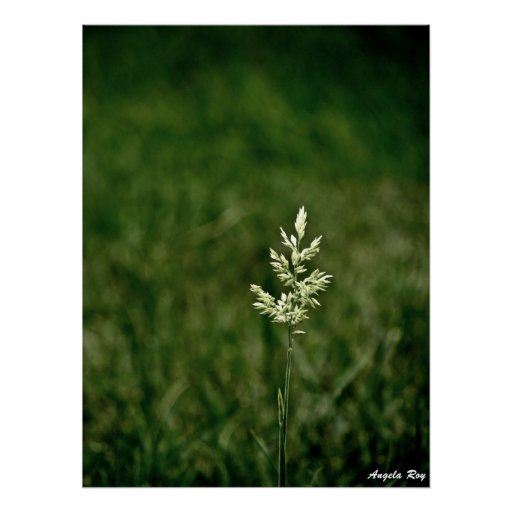 A Single Weed Print