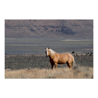 A single wild horse stands alone print