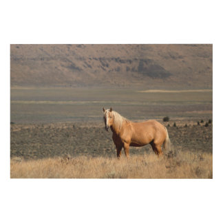 A single wild horse stands alone wood prints