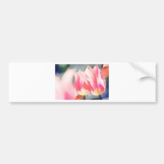 A Sketch of Tulipa Duo Bumper Sticker
