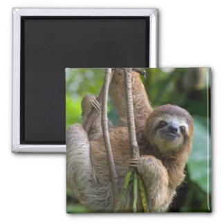 A sloth Magnet
