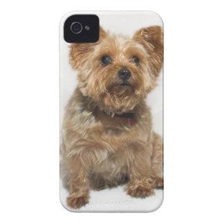 A small Dog BlackBerry Bold Case