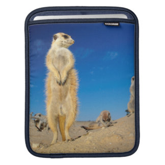 A small Suricate family interacting at their den iPad Sleeves