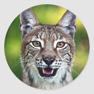 A Smiling Siberian Lynx Classic Round Sticker