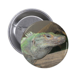 A smug lizard Are you looking at me Pins