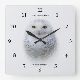 A Snowy Owl Encounter Square Wall Clock