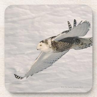 A Snowy owl gliding. Beverage Coaster