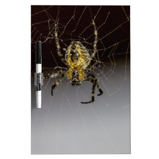 A Spider And His Web Up Close Dry Erase Board