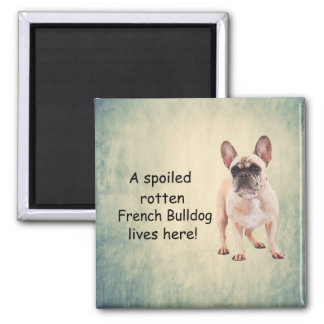 A Spoiled Rotten French Bulldog Lives here Magnet