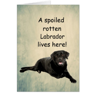 A Spoiled Rotten Labrador Lives Here Card
