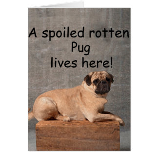 A Spoiled Rotten Pug Lives here Card