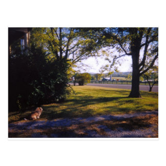 A spot of pastoral beauty in Brentwood, Tennessee Postcard
