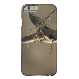 A Steenbok looking at the camera while it eats Barely There iPhone 6 Case