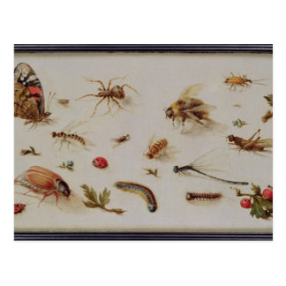 A Study of Insects Postcard