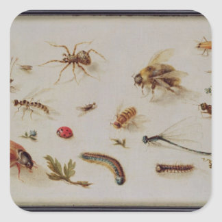 A Study of Insects Sticker