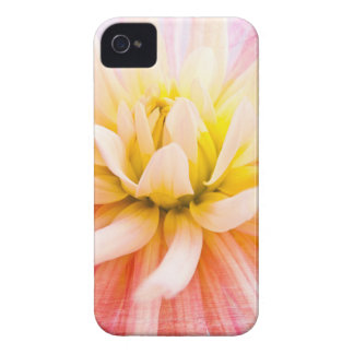 A summer Dahlia flower on wood texture iPhone 4 Case-Mate Cases