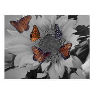 A Sunflower with Several Butterflies Poster