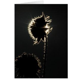 A Sunflower's Corona Card