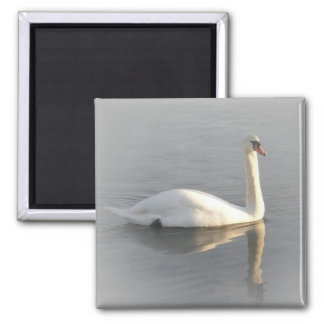 A swan gliding by refrigerator magnets