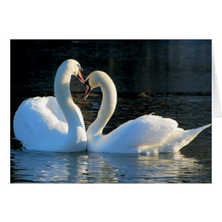 A Swan Heart Kiss, Reflections of Love Greeting Card