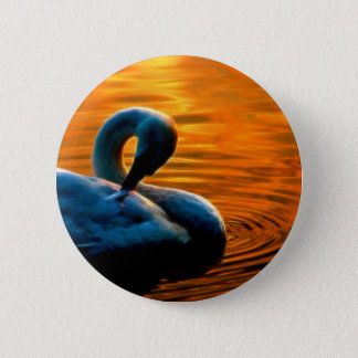 A Swan Taking a Last Minute Swim at Sunset 6 Cm Round Badge