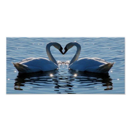 A Swimming Swan Heart Kiss, Reflections of Love Posters
