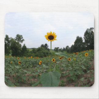 a tall sunflower mouse pad