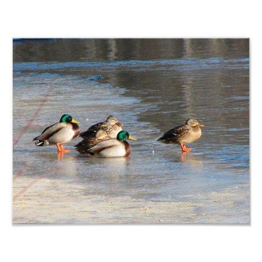 A Team Of Ducks Photo Art