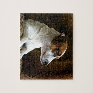 A Thinking Jack Russell Terrier Jigsaw Puzzle