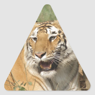 A tiger lying casually yet alert triangle stickers