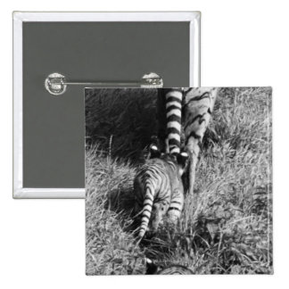 A tiger with her two cubs at Whipsnade Zoo. 15 Cm Square Badge
