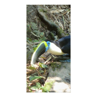 A Toucan Perches on tree roots on the forest floor Photo Cards