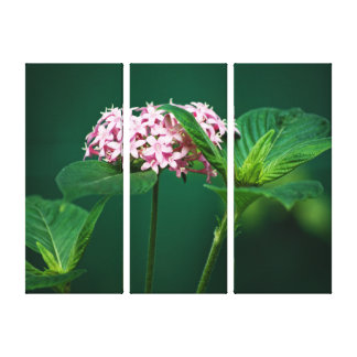 A Touch of Pink in the Green Canvas Print